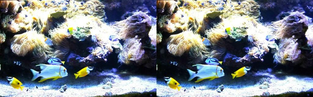 3dwiggle fish 3d image examples