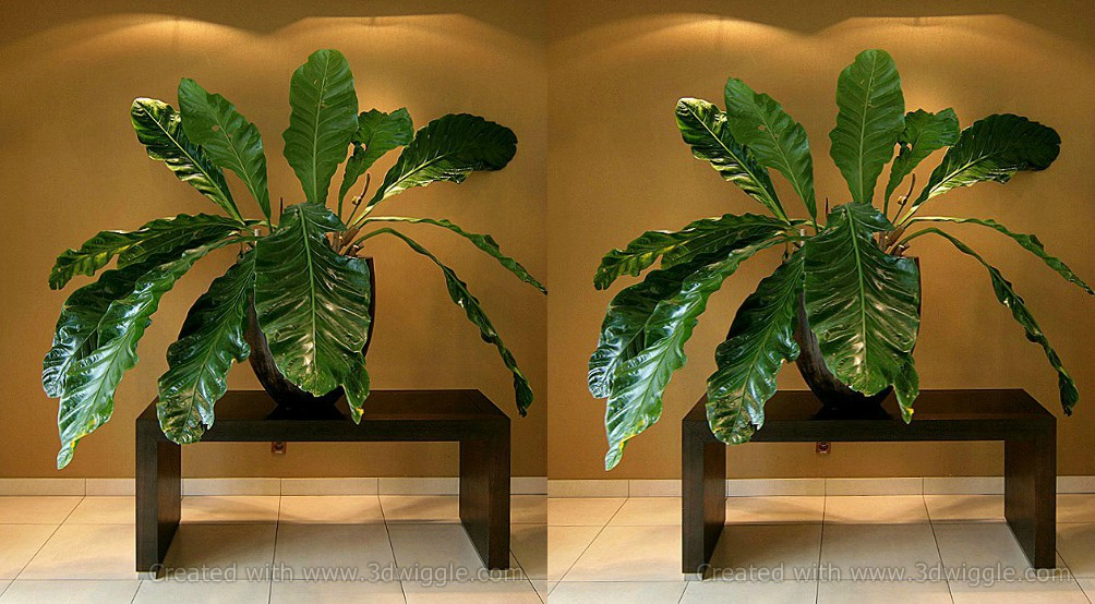 plant-stereogram-3dwiggle-software