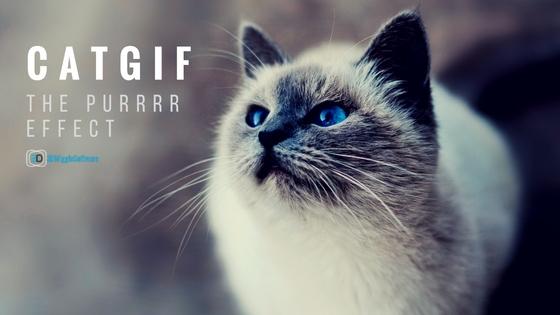 cat_gifs_feature_image_3dwiggle